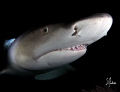   Lemon Sharks are always fun dive with. There never moment dull. They welcome smile This image was taken Tiger Beach Bahamas with dull  